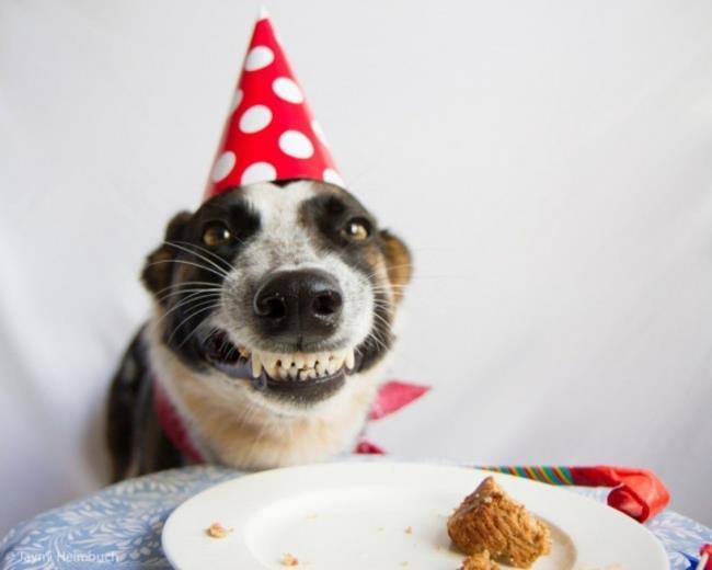 animais-aniversário-52