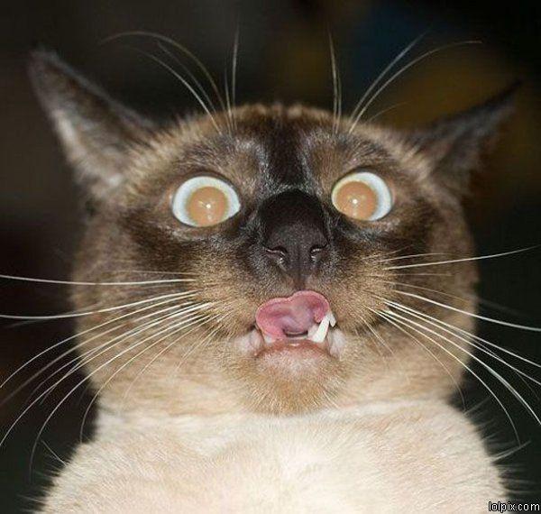 animais-gatos-engracados-22