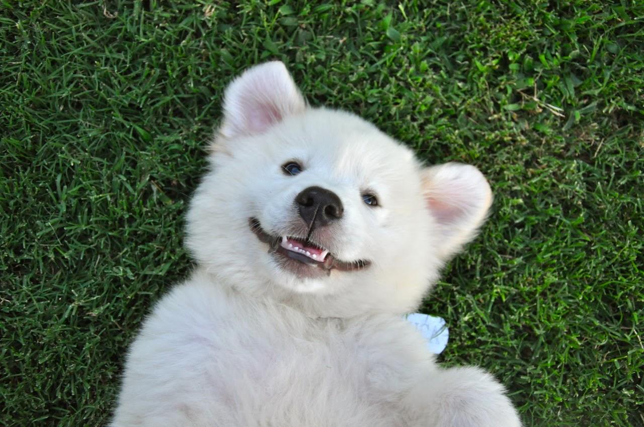 cachorro-sorrindo