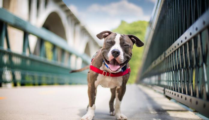 Cães sorrindo – As melhores fotos