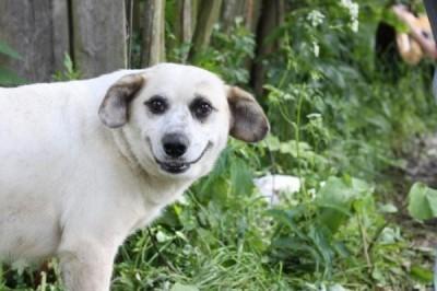 cachorro_sorrindo