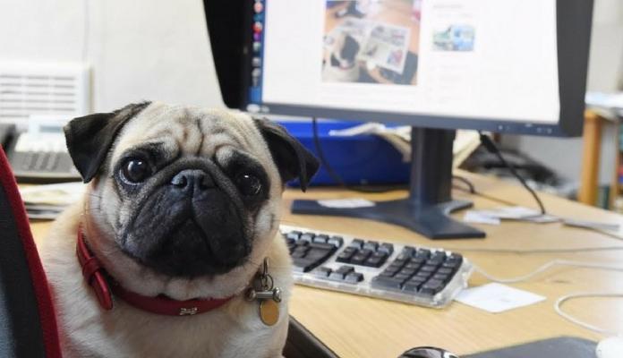 Pet na empresa: quando os animais no ambiente de trabalho são bem vindos