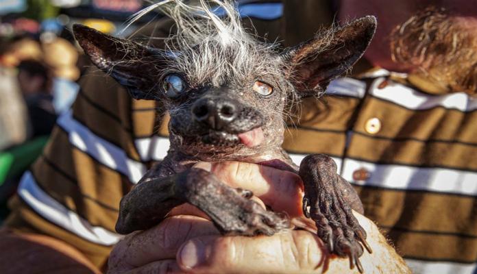 Cão mais feio do mundo
