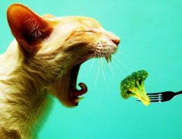 Alimentos naturais para gatos – Saiba o que pode:
