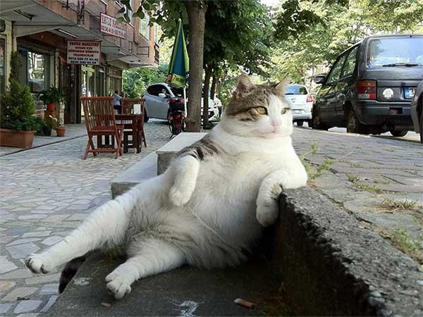 foto-gato-sentado-7