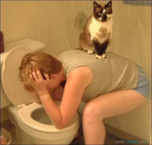 fotos-de-gatos-15