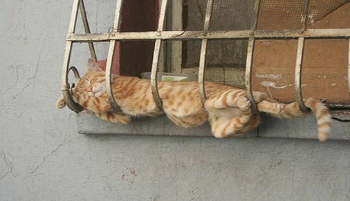 Fotos de gatos engraçados