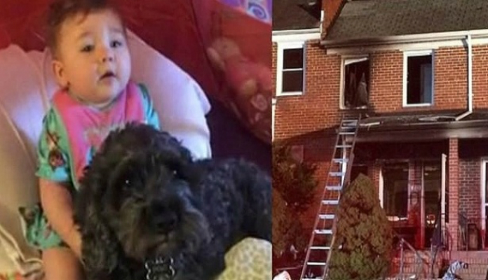 Cão herói morre após ajudar a salvar bebê em incêndio nos EUA