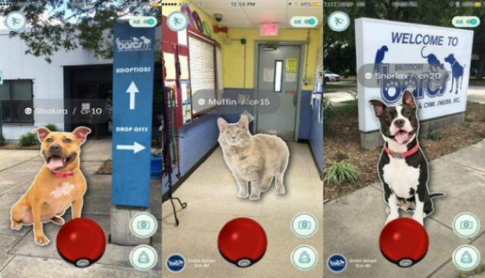Cães de abrigo viram companhia na caça por Pokémons