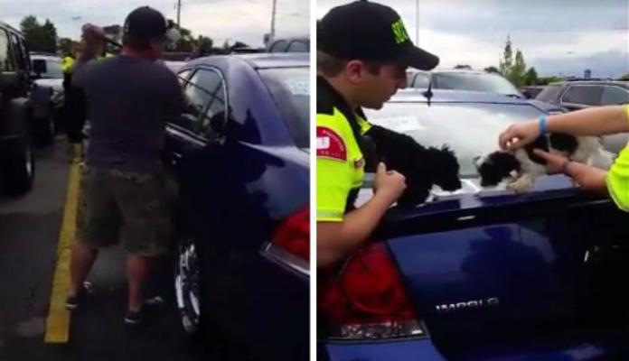 Clientes de shopping quebram vidro de carro para salvar cachorrinhos