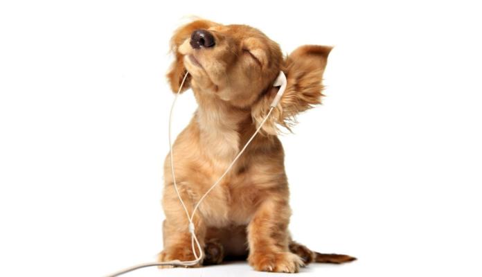 Vídeos de cachorros dançando – Veja os melhores