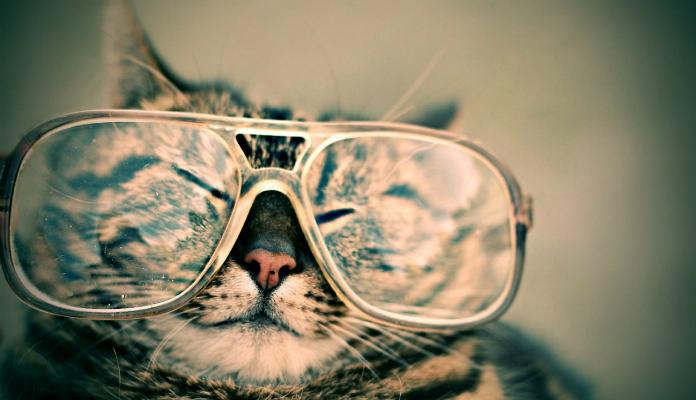 Vídeos mais engraçados de gatos