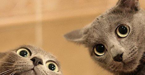 ver-videos-engracados-de-gatos-animais
