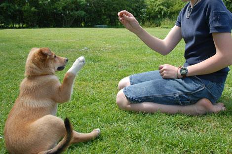 Os-cães-entendem-o-que-nós-falamos