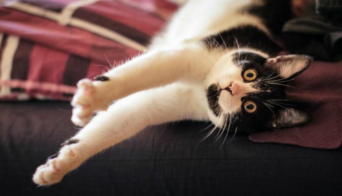 Arranhador para gatos – Como incentivar o felino a usar