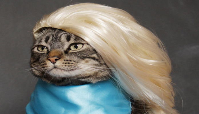 Cansei de ser gato – saiba como surgiu a página