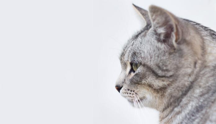 Cinomose em gatos – Entenda a diferença