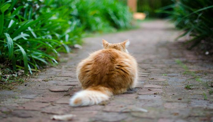 Cio nas gatas – Castração e ciclos