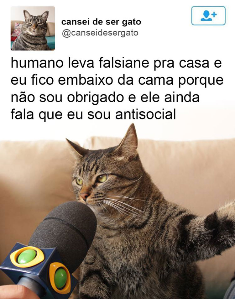 gatinho-entrevistado-falsiane