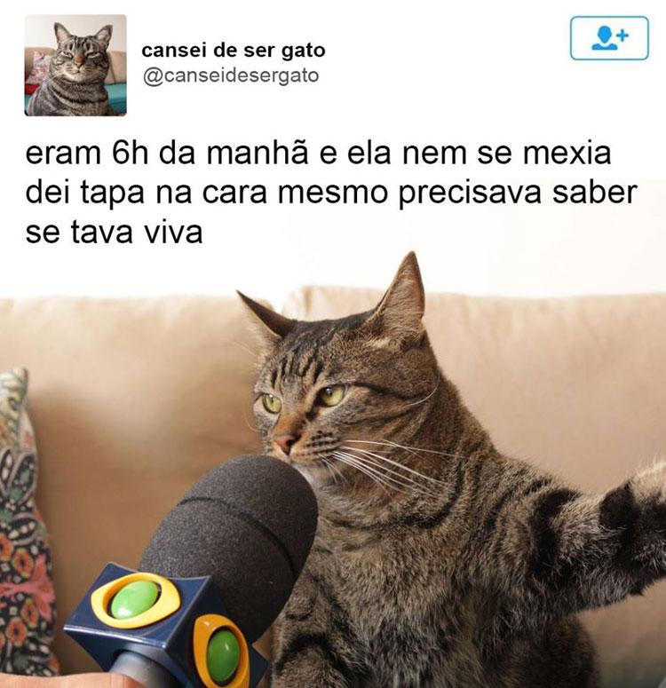 gatinho-entrevistado-tapa