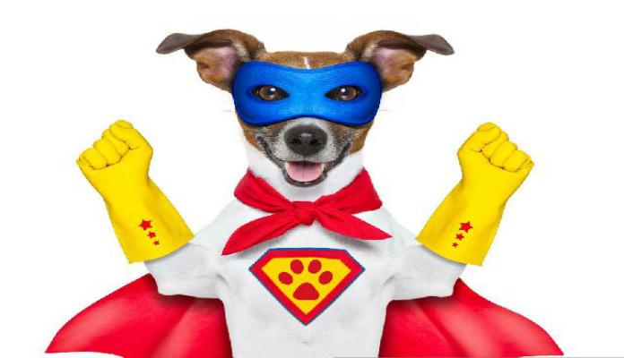 Herói – Conheça a história de um cão que salvou a dona