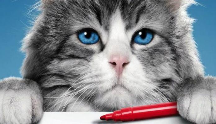 Virei um gato – Filme
