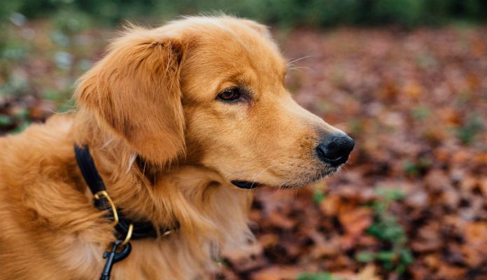 Como ensinar o cachorro a fazer as necessidades na rua