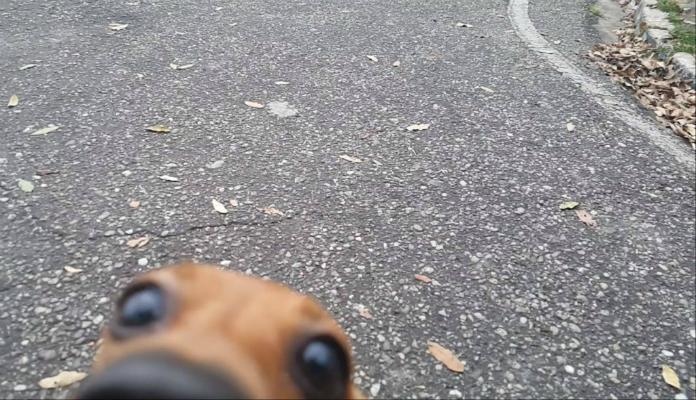 Conheça Costelinha – o cão arrependido