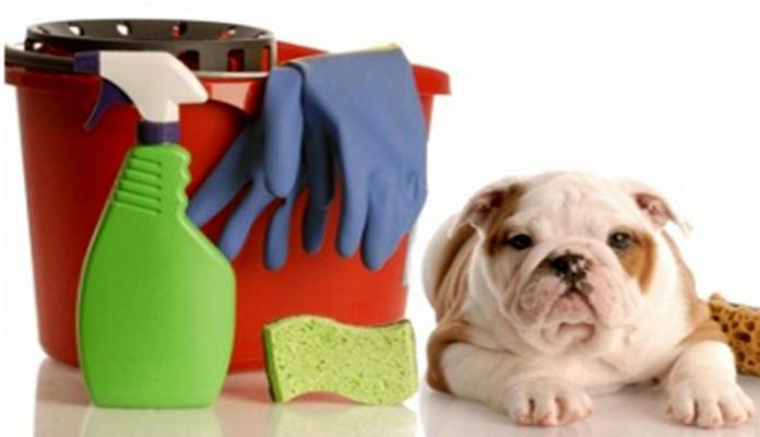 Limpeza na casa sem prejudicar o pet
