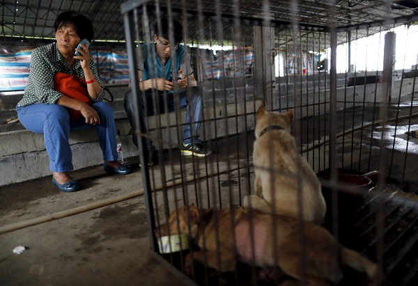 Animal lover Yang Xiaoyun (L) uses a mobile phone next to a cage accommodating dogs which she purchased from dog vendors to rescue them from dog meat dealers at a temporary shelter ahead of a local dog meat festival in Yulin, Guangxi Autonomous Region, June 21, 2015. Local residents in Yulin host small gatherings to consume dog meat and lychees during the festival, which falls on Monday this year, in celebration of the summer solstice which marks the coming of the hottest days. REUTERS/Kim Kyung-Hoon