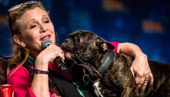 """Gary, Cãozinho de Carrie Fisher emociona o mundo: """"Eu ainda estou te esperando"""""""