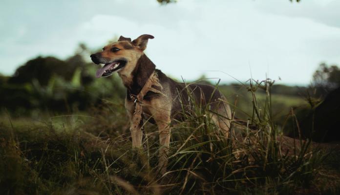 Garoto de 9 anos funda abrigo para animais desprotegidos