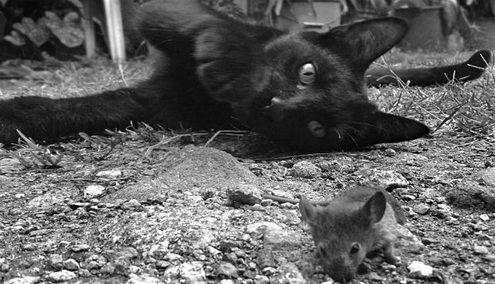 A amizade verdadeira entre os animais