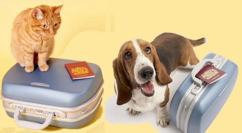 cachorro-e-gato-viagem