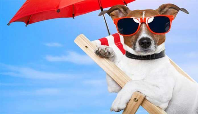 Os principais cuidados com os cães e gatos no verão.