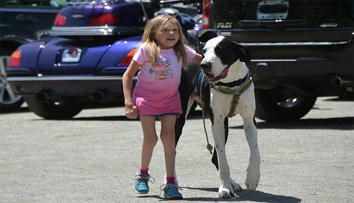 Um cão da raça (Great Dane) ajuda menina com síndrome rara a aprender a andar.