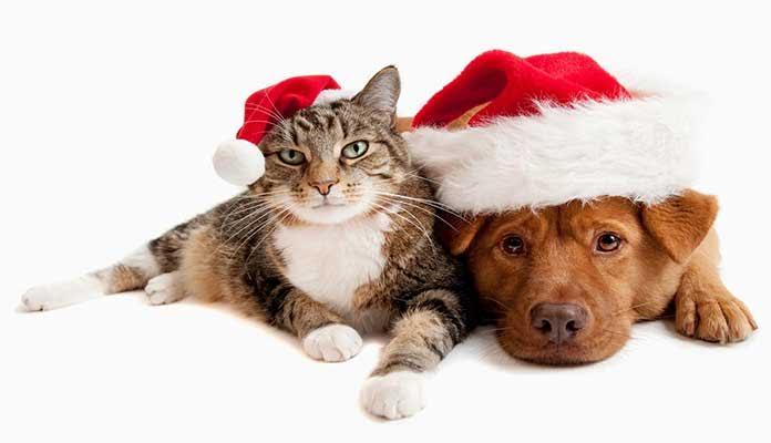 Alguns cuidados com os pets nas festas de fim de ano