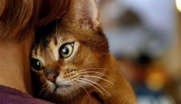 Razões para ter um gato em sua vida