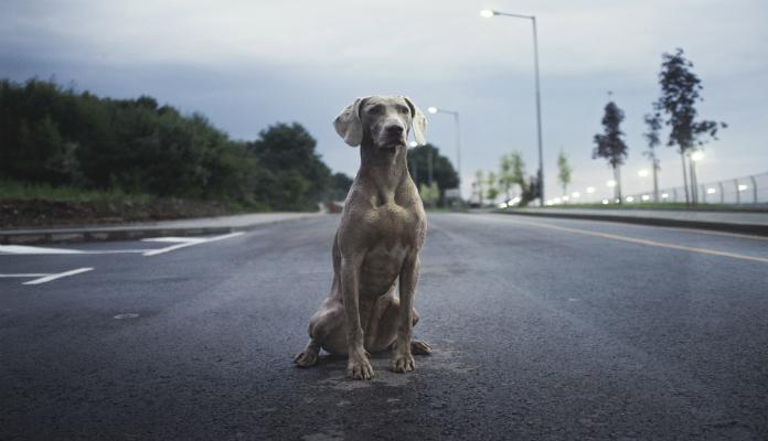 Motoqueiros interrompem avenida agitada para resgatar cãozinho