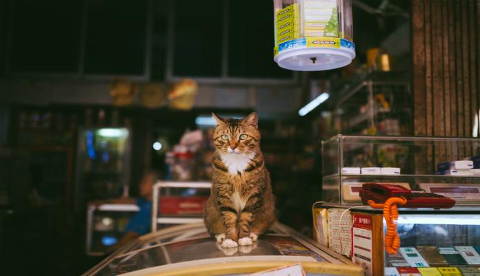 O melhor alimento para os gatinhos