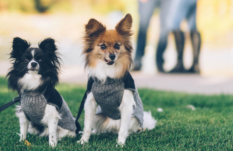 10 boas razões para ter um cachorro