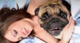 Psicóloga diz que cães sonham com seus donos