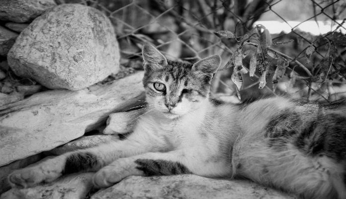 Fotógrafa faz ensaio especial com gatinhos cegos