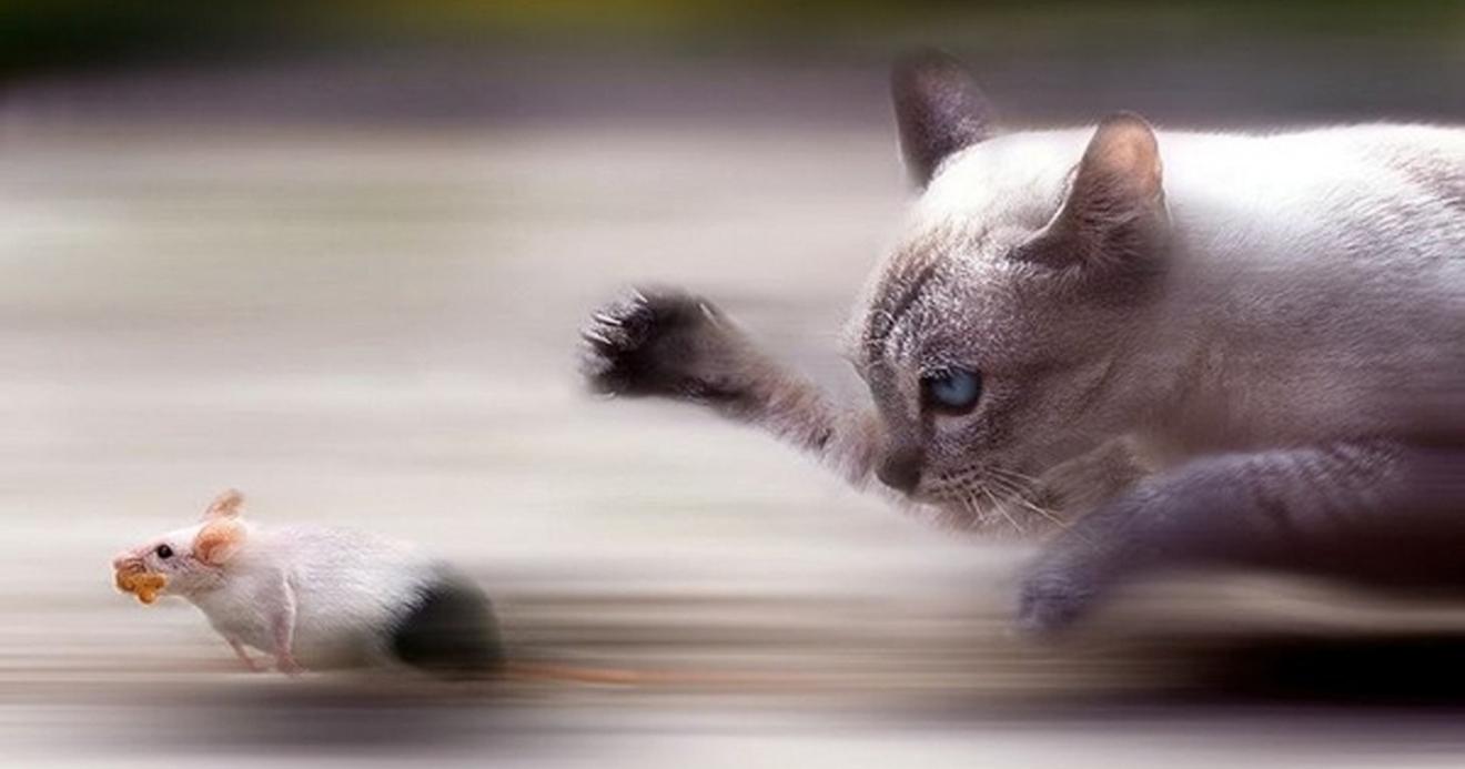 Por que meu gato traz animais mortos para casa (ratos, baratas) ?