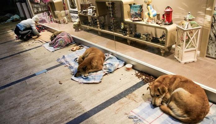 Shopping abre portas para Cães desabrigados durante tempestade de neve na Europa.