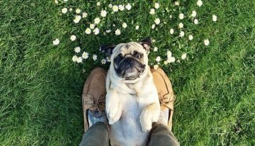 Estudos detectam como os cães veem seus humanos