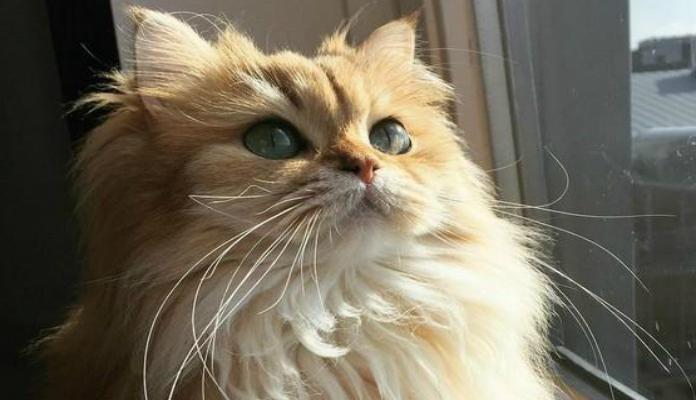 Smoothie, a gata mais fotogênica e linda do mundo.
