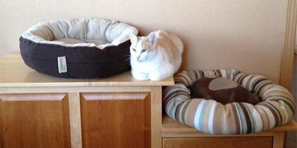 logica-dos-gatos-012