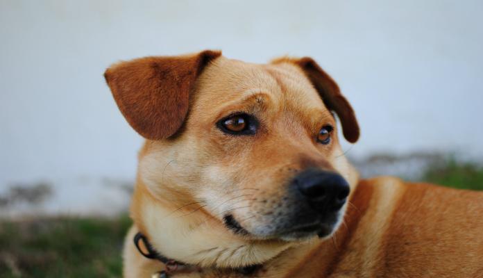 O olhar dos cães