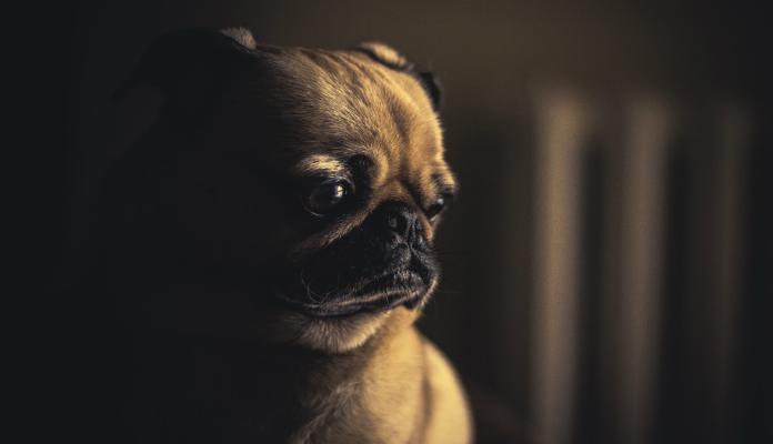 Falta de ar nos cães